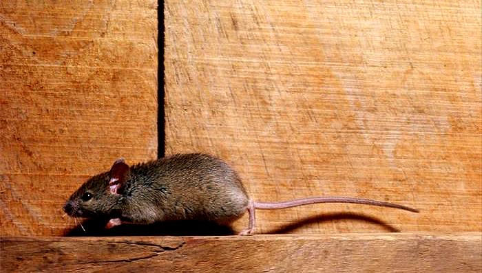 ratonesbarriopuertointro