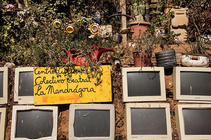 lamandragora1