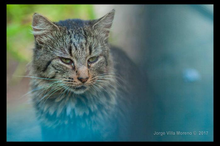 ©Jorge Villa Moreno 8